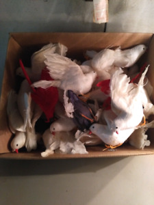 Doves for crafts