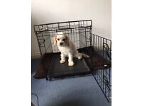 Small Dog Crate £10