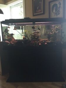 60gal + everything with it
