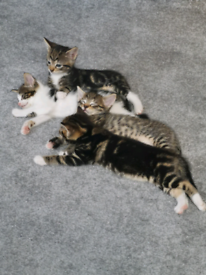 4 Beautiful Kittens For Sale - 2 Males Left
