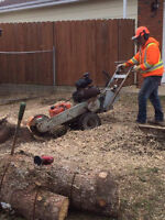 Stump Grinding without Grinding your Wallet