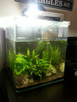 FLUVAL CUBE TANK Aquarium with all Plants Accessories