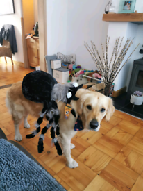 Large Dog Spider Costume