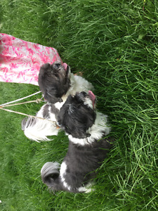 2 dogs found on Terry Fox path July 25