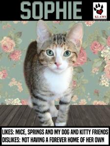 Meet Sophie - A beautiful KLAWS kitten!