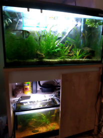 2x aquarium, 100l, 25l with stand, 3 filters, light