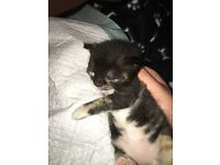 Kittens x2