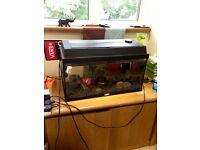 60L fish tank and fish