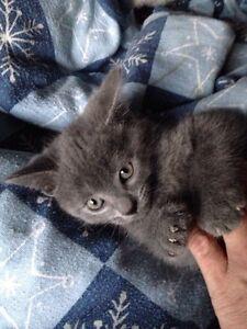 Kittens - gone pending pick up