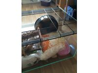 Rodent/pet cage and accessories