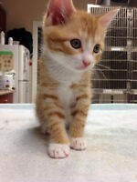 Loveable kittens for adoption