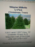 Wayne Milletts U-Pick Christmas Trees