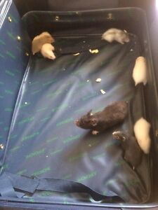 6 Baby hamsters