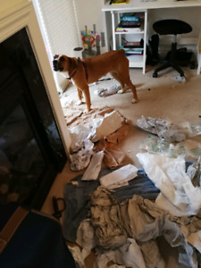 Looking for dog boarding and training