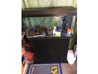 Large fish tank & stand everything included