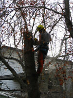 SKELLY'S TREE SERVICES