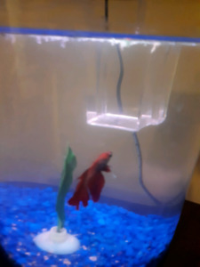 Fish And Accessories For Sale
