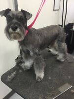 Dog grooming by a certified groomer!