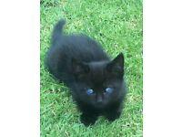 Kittens ready now for loving homes