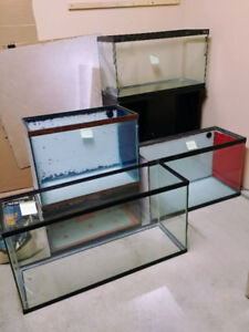 Multiple fish tanks ranging from 35 to 10 gallons