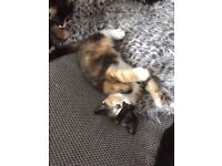 3 kittens available now for loving homes