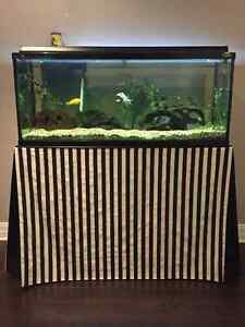 75 Gal. Aquarium with all accessories and African Cichlids