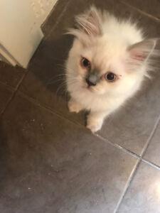 Chatons Kittens bébé chats baby