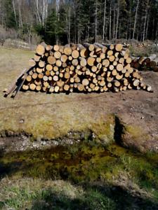Campfire / firewood