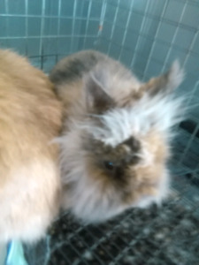 4 Rare rabbits for sale with (CHEAP)