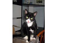 Lovely female black and white cat