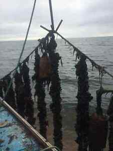 Mussel Lease for sale