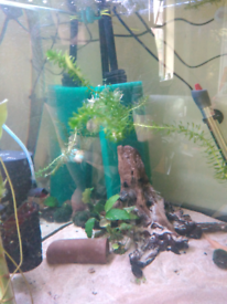 Wanted Tropical / cold water fish will pay cash