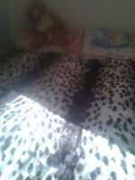 Queen Size bed for sale, Owner is moving out