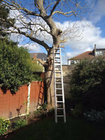 Tree Removal,Limbing.Climbing FREE QUOTES. FULLY INSURED.