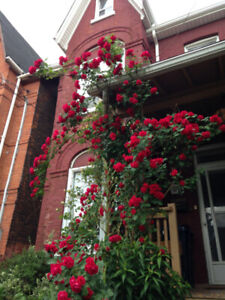 Furnished 2-story Loft with Grand Piano, Garden (Junction)