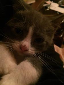 5 kittens for rehoming