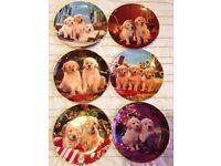 Royal Doulton Labrador puppy plates Franklin Mint