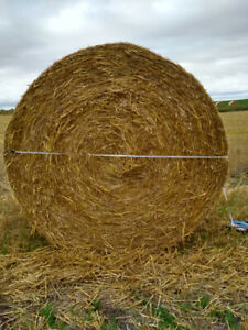 Straw Bales | Kijiji in Manitoba. - Buy, Sell & Save with ...