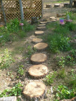 Looking for Wood for Natural Playspace