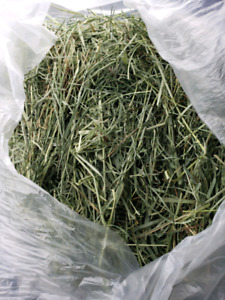 PREMIUM WESTERN TIMOTHY HAY 2ND CUT -   LOW FLAT RATE DELIVERY