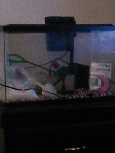 Selling of trading for a 60 gallon filter for aquariums
