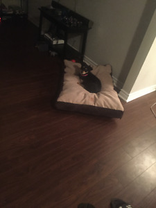 Unused Dog Bed