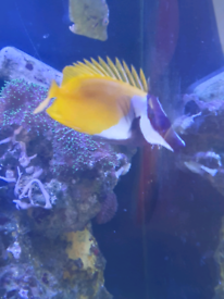 Marine fish/ frags