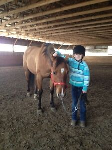 11 year old quarter horse REDUCED