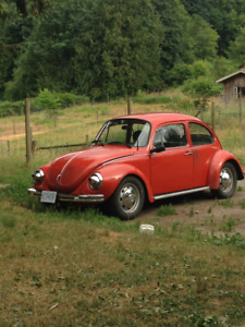 Classic Beetle in search of warm garage and pampering