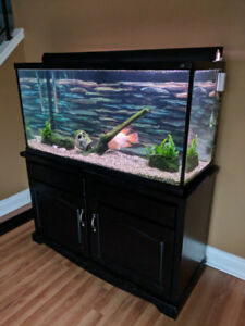 90 gallon Hagen fish tank aquarium set up