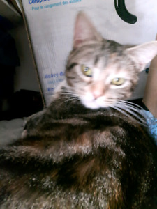 Looking for home for cat
