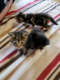Kittens for sale.