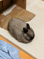 Bunny rehoming