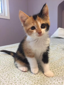 We are Looking for kitten/young cat to a great home!!